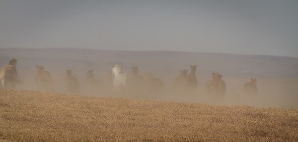 A Dusting of Horses