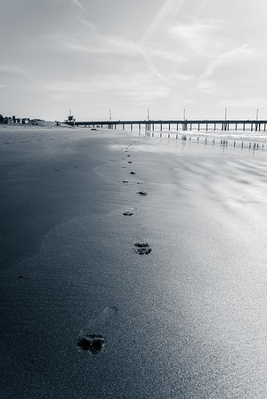 Footsteps to Venice Pier Black and White
