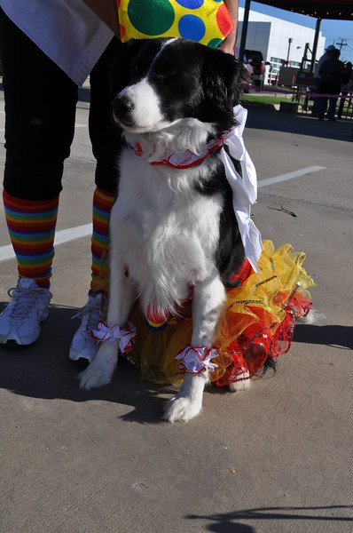 Jerry's Fall Fest October 27, 2012 - Sugar, owned by Cheryl Heartsill