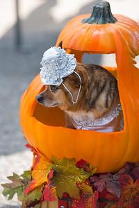 Nadeen Murphree's dog wears a Cindella costume in a pumpkin carriage.
