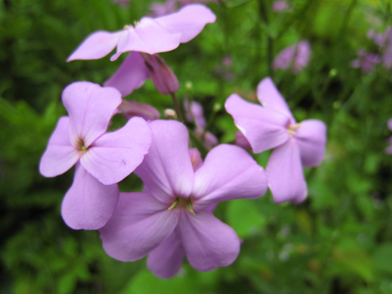 Flowers de la Lavender