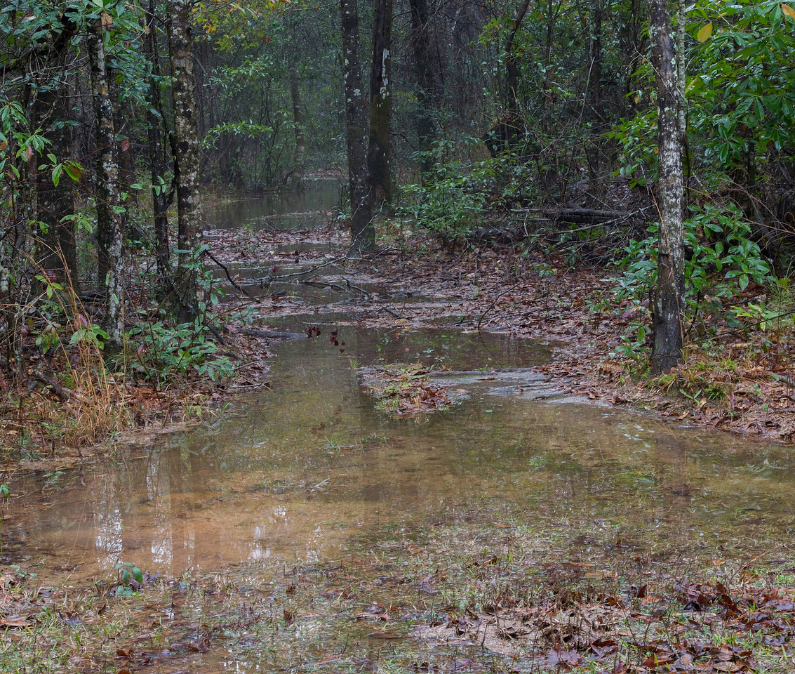 1/10/13<br /> Been raining for weeks; this is not a swamp it is my back yard.