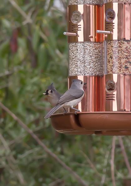 3/22/13 - Bird feeder