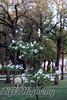 Dogwood and Oaks