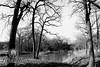 The Pond I<br /> BW