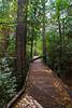 Sweetwater Creek Trail 1
