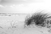 Santa Rosa Island dune