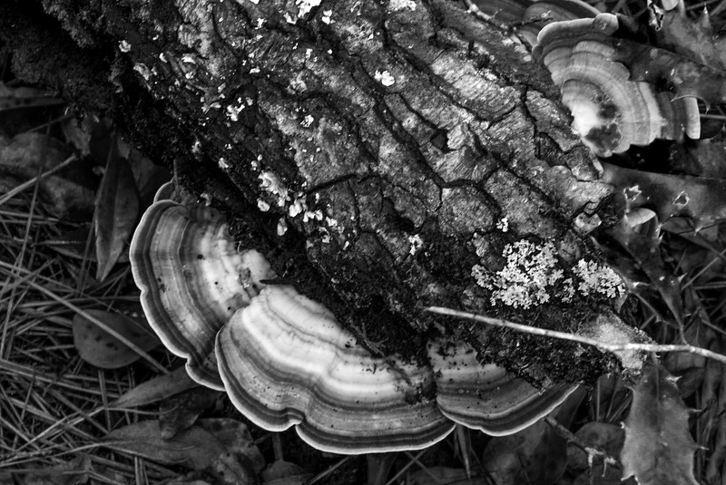 Fungi in black and white