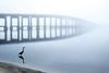 Great Blue Heron, Navarre Bridge, Foggy morning