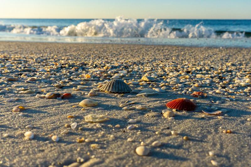 Shells at Sunrise