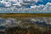 Everglades from Airboat 1