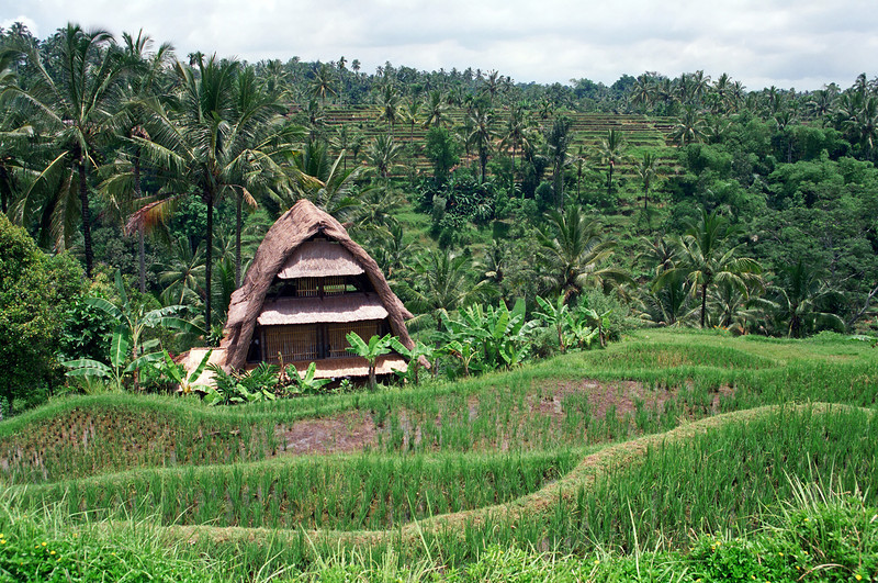 Rural home in rice paddy area in Bali, Indonesia
