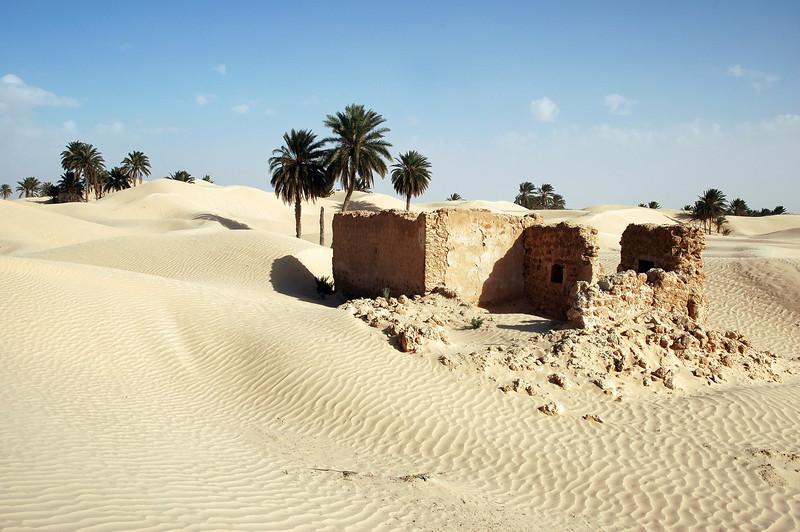 Migrating sand dunes in the Zaafrane oasis, Tunisia