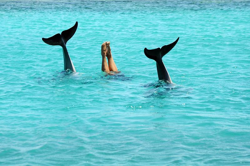 Aquatic synchro trio, Curaçao