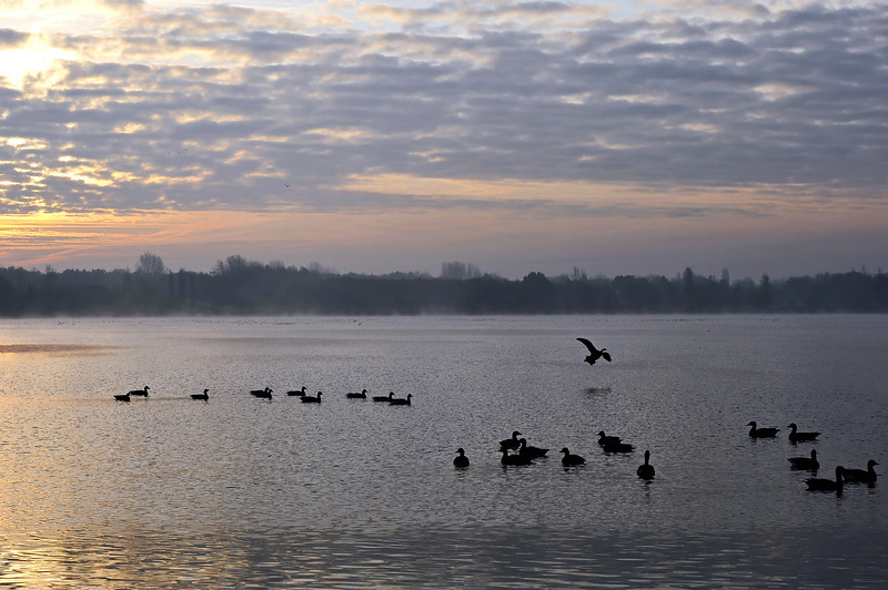 November morning at Klinkenberger lake, The Netherlands