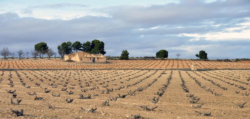 Abandoned finca surrounded by vineyards near Yecla, southeast Spain
