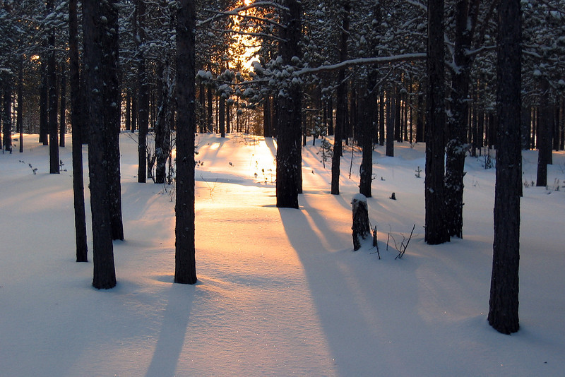 Winter forest in west Siberia, Russia