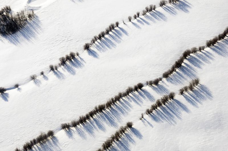 Tree lineaments in snowy Alberta plains, Canada