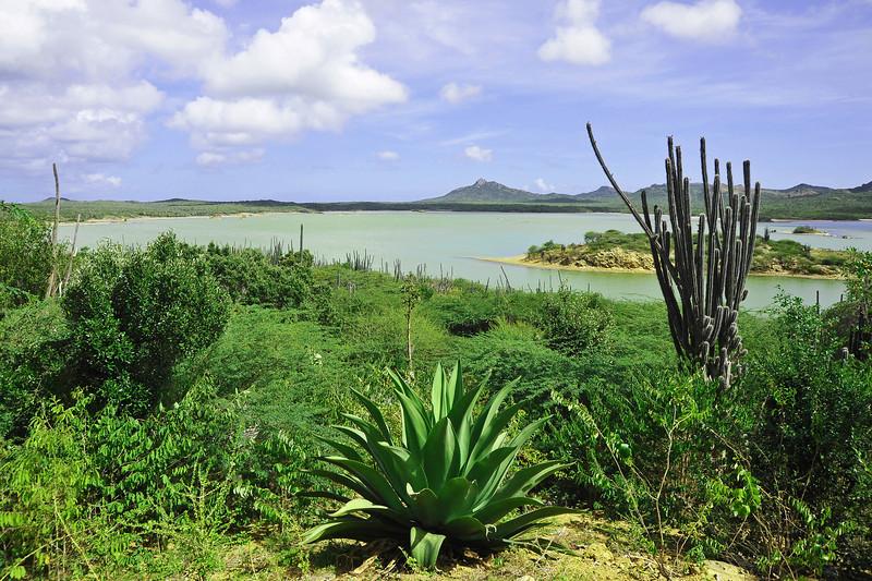 Gotomeer salt lake in northwest Bonaire