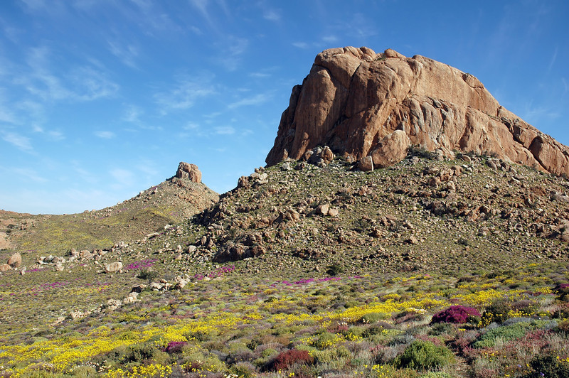 Desert vegetation in bloom near Klein Aus, southern Namibia