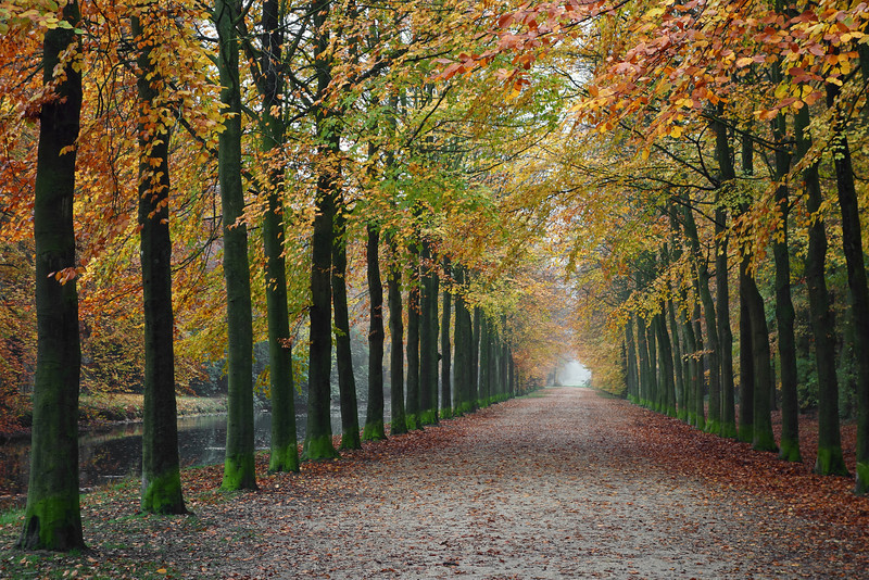 Forest road in autumn, The Netherlands