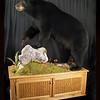 400+lb Pa black bear