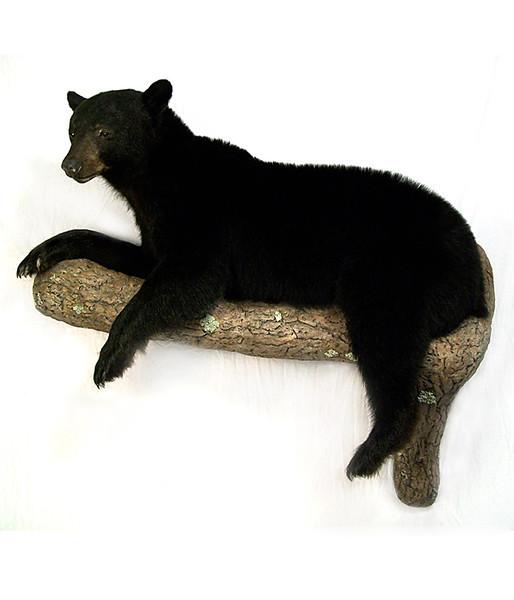 black bear on limb