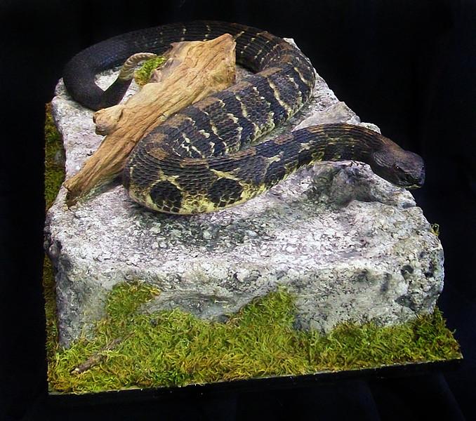 PA timber rattlesnake