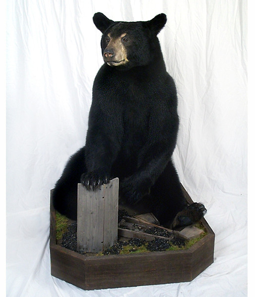 black bear with bird feeder