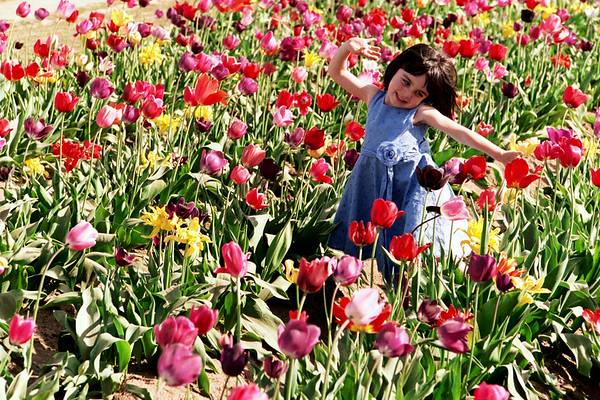Dance Of The Tulips.