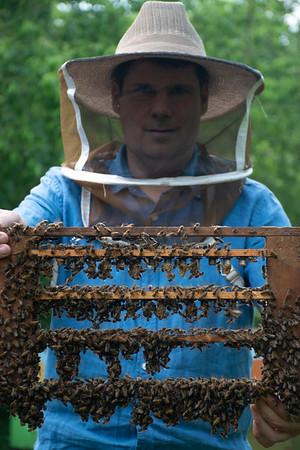 Purdue-Bees-5609
