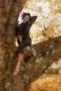 On a limb