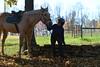 Sheila Wise riding a horse