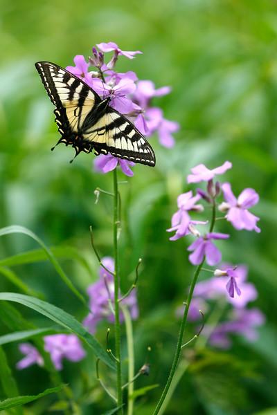 A walk through Pleasant Valley Wildlife Sanctuary-060915