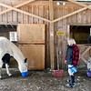 BEN GARVER — THE BERKSHIRE EAGLE<br /> Judy Luczynsky feeds  the horses at Berkshire horseworks in Richmond. The horses are used for therapy and team building exercises.