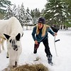 BEN GARVER — THE BERKSHIRE EAGLE<br /> Hayley Sumner cares for her horses at Berkshire horseworks in Richmond. Sumner is recovering from an ankle injury but is able to get out and check on her horses and donkeys. Sumner usees the animals for therapy. The horse in the photo is named Spirit.