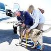 BEN GARVER — THE BERKSHIRE EAGLE<br /> Mike and Betsy Shinego of Tiverton, RI, meet  Abby, a shepherd that was saved from a high-kill shelter in South Carolina with the help of Pilots N Paws, Pittsfield Municipal Airport, Wednesday, April 17, 2019.