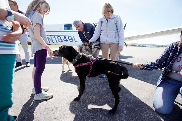 BEN GARVER — THE BERKSHIRE EAGLE<br /> Mike and Betsy Shinego of Tiverton, RI, meet  Abby, a shepherd and Julie, a Labrador, a dog saved from a high-kill shelter in South Carolina with the help of Pilots N Paws, gives a kiss to one of the supporters at the Pittsfield Municipal Airport who greeted her being delivered to Mike and Betsy Shinego of Tiverton, RI, Wednesday, April 17, 2019.