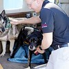 BEN GARVER — THE BERKSHIRE EAGLE<br /> Pilot Todd Workman Opens the door for  Abby, a shepherd and Julie, a Labrador, were saved from a high-kill shelter at the Pittsfield Municipal Airport, the two dogs arrived from South Carolina to be Rescued by Mike and Betsy Shinego of Tiverton, RI, Wednesday, April 17, 2019.