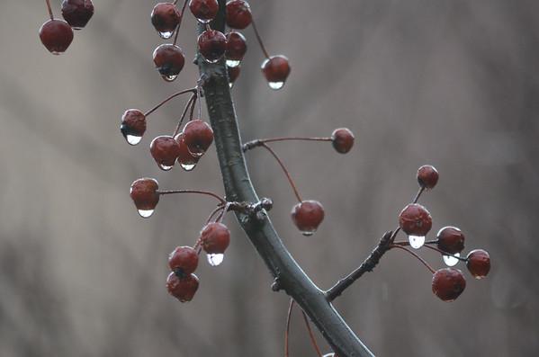 Rainy Sunday-011016