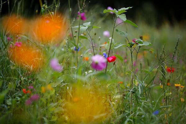 Wildflowers at Kripalu-081115