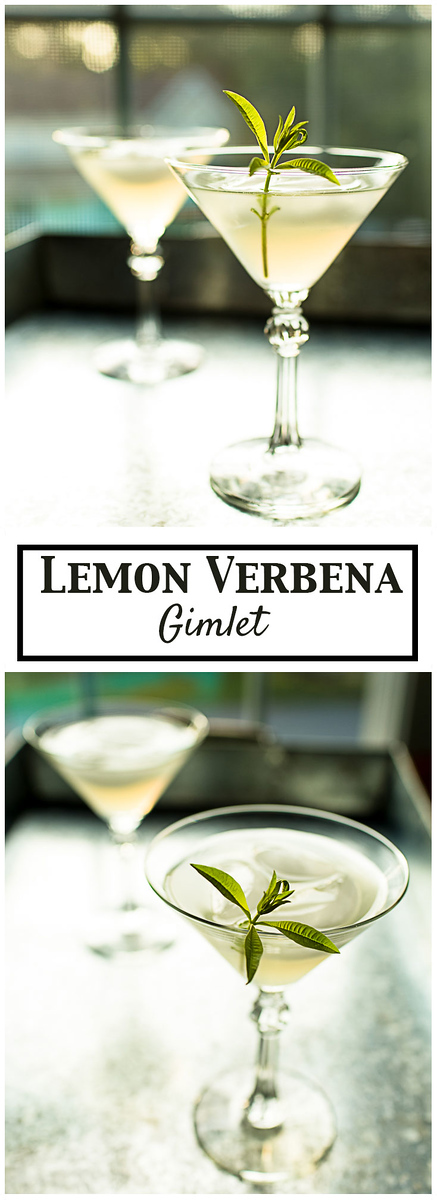 Lemon Verbena Gimlet - a lemon verbena simple syrup makes this so refreshing!