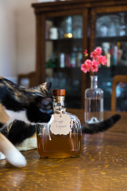 cat photobombing bottle of homemade ginger liqueur