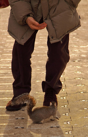 Fat little squirrel was not shy about climbing up people's legs, London, United Kingdom