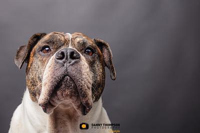 Pet Photography Halifax West Yorkshire & Uk Wide-23