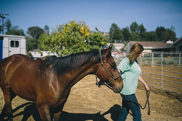 HORSES//