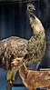 102913 Natural History emu dog