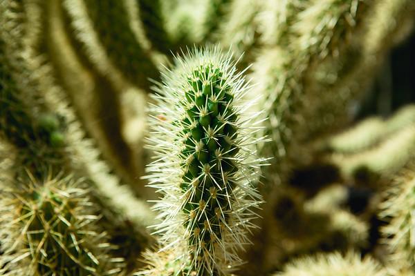 Phoenix Botanical Gardens