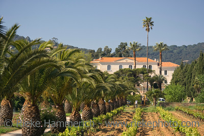 winery behind a vineyard and palm trees - french riviera  - adobe RGB