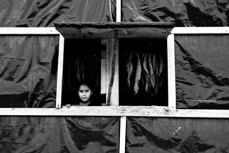 A young girl peeks out of a tabacco drying barn in Nicaragua.